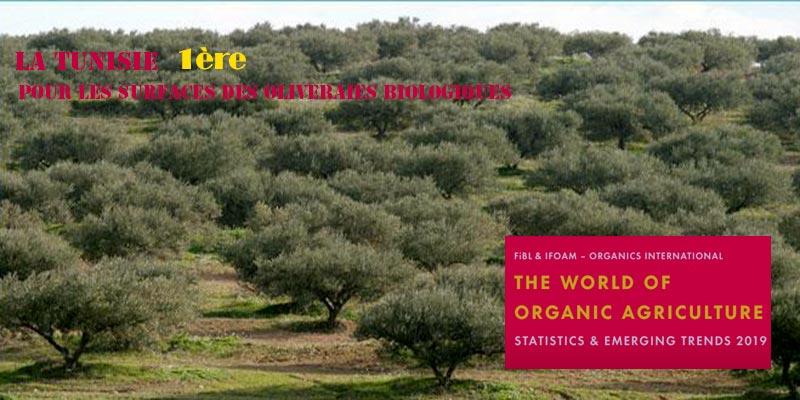 La Tunisie arrive première dans le monde dans le classement des surfaces des oliveraies biologiques