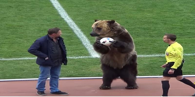 بالفيديو: دب يعطي إشارة انطلاق إحدى مباريات الدوري الروسي