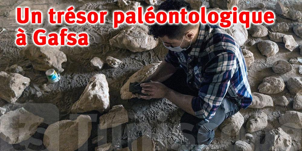 Une étude paléontologique pointue menée par la Suède en Tunisie