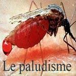 Ministère de la Santé : 4 cas de paludisme enregistrés en Tunisie