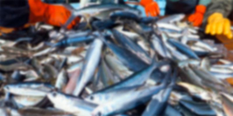 Les exportations des produits de la pêche couvrent les importations à hauteur de 63,1 MD<