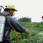 Syndrome de Parkinson et pesticides: Un lien étroit