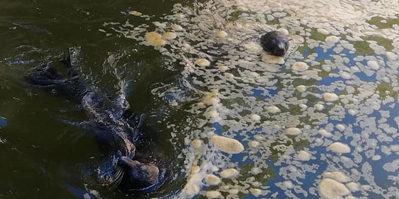 Une vidéo filmée au parc du Belvédère choque la toile