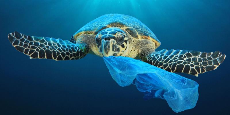 Le Tunisien consomme en moyenne 5 grammes de plastique par semaine