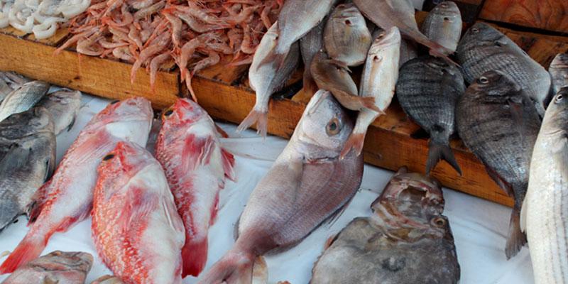La balance commerciale des produits de la pêche enregistre un excédent de 207,9 MD
