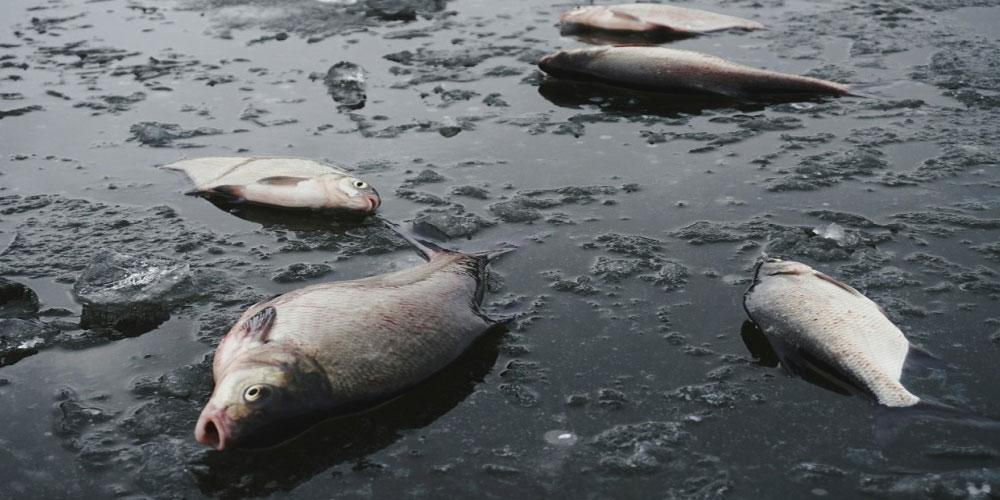 المنستير: نفوق حوالي 20 كغ من الأسماك بسبب النقص الحاد في الأكسيجين