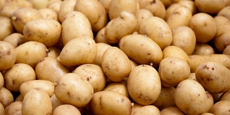 Selon Abdelmajid Zar, les pommes de terre importées de Turquie sont impropres à la consommation