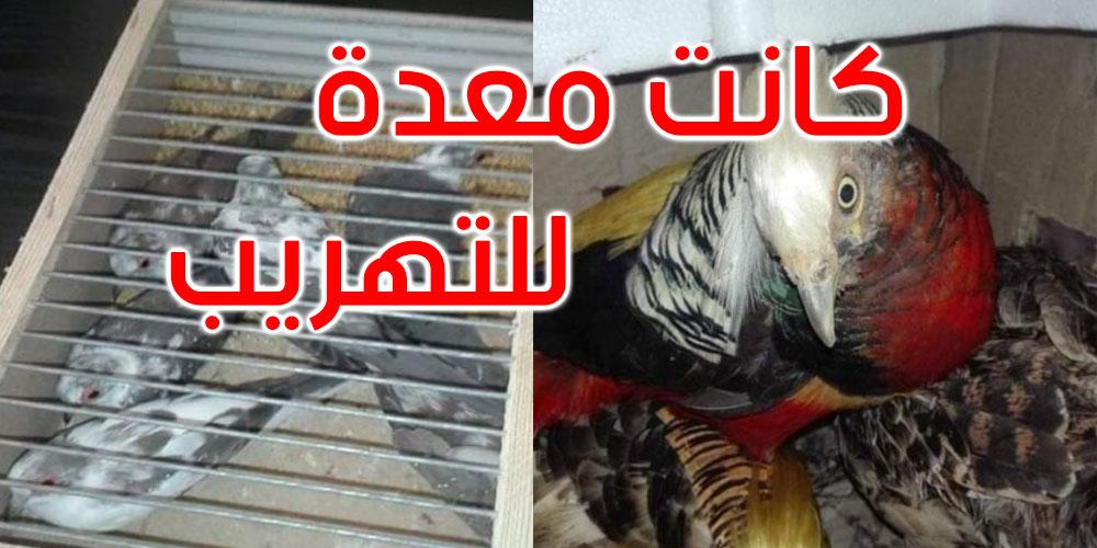 جندوبة: حجز طيور نادرة مهددة بالانقراض بطبرقة