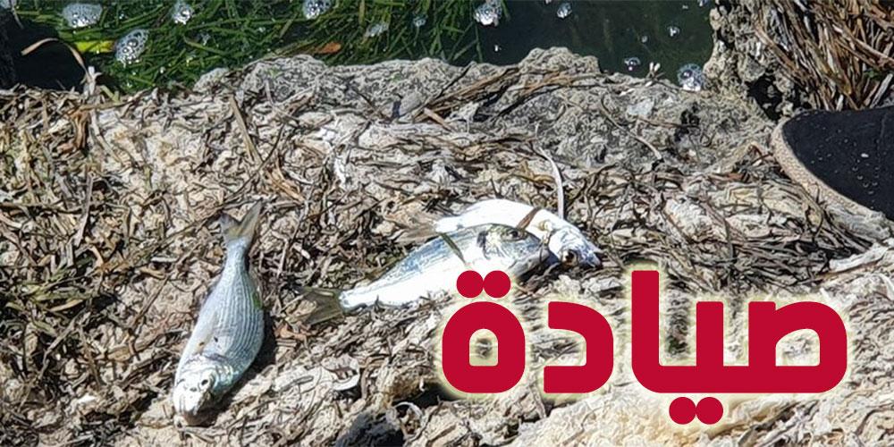نفوق أسماك بالمنطقة الساحلية بصيادة، توضيح الفلاحة