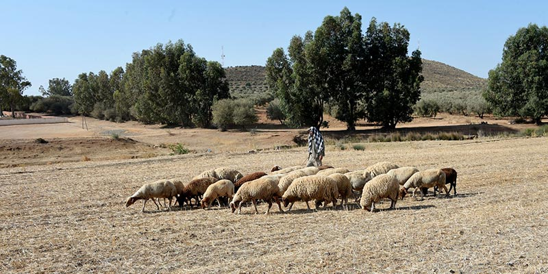 le Climate Risk Index classe la Tunisie 136ème pour les risques climatiques