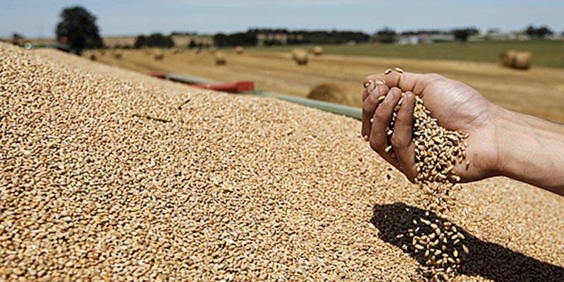 La récolte de céréales de cette année est la deuxième plus grande depuis l'indépendance