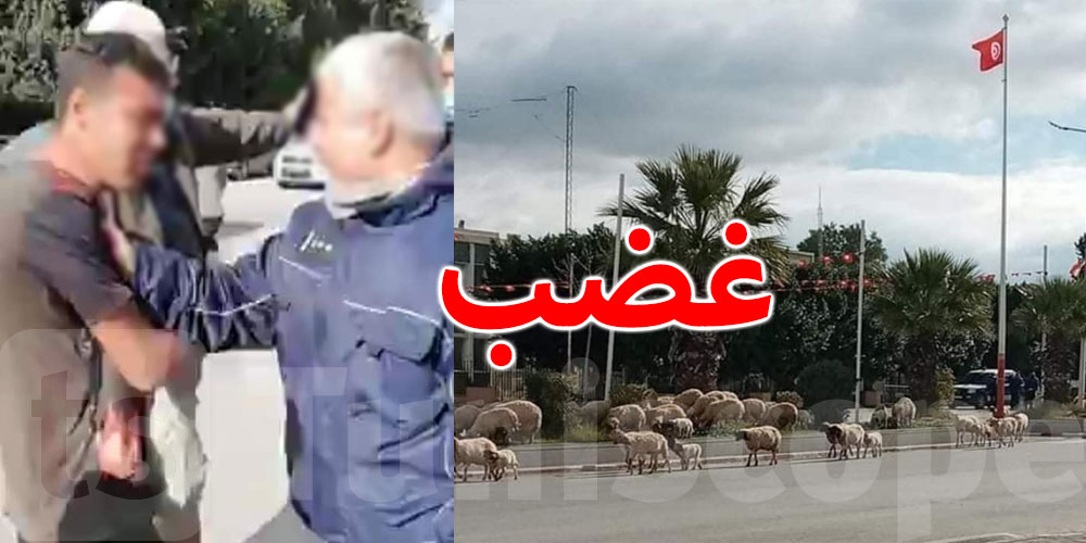 سليانة..موجة غضب بعد إهانة راعي بسبب مرور أغنامه أمام مقر الولاية