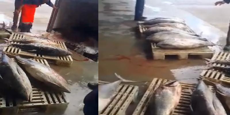 بالفيديو: العاصمة: حجز 3 أطنان من أسماك التنّ الفاسد