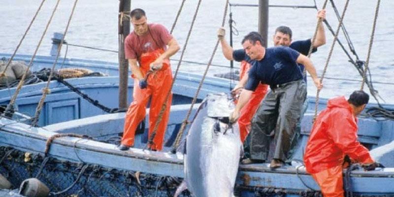 المنستير: البحارة يطالبون بحصة إضافية وبحلول جذرية في مجال صيد التن الأحمر