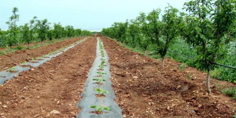 L'UTAP impute la responsabilité du retard dans la campagne des grandes cultures au ministère de l'agriculture
