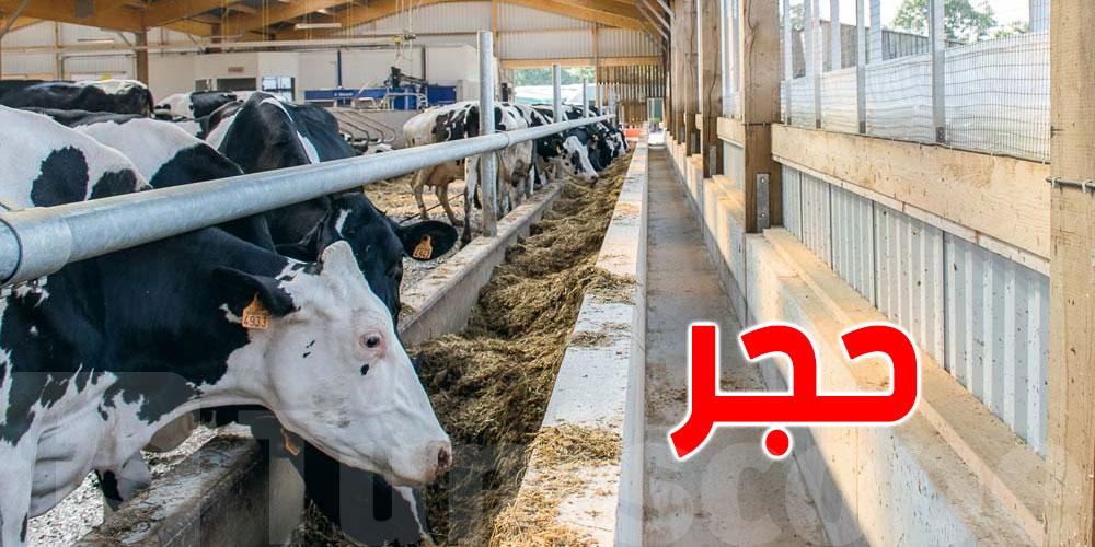 تونس: حجر صحي على إسطبل أبقار
