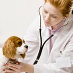 La Tunisie en tète de l'Association Mondiale Vétérinaire