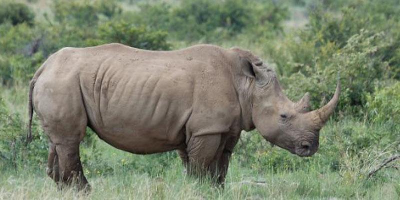 وحيد قرن يطارد السياح ويرعبهم