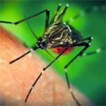 En détails : Le Plan de Riposte et de Prévention du risque d'introduction du Virus Zika en Tunisie
