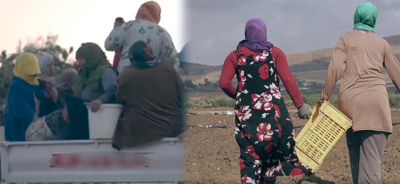 بالفيديو: نحب نعيش..فيلم قصير عن واقع آلاف النساء العاملات في الوسط الريفي